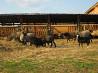 Крестьянское фермерское хозяйство по разведению овец Псков
