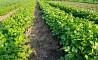 Круглогодичный сельскохозяйственный бизнес,теплица, 4га с/х объявление из г.Тула